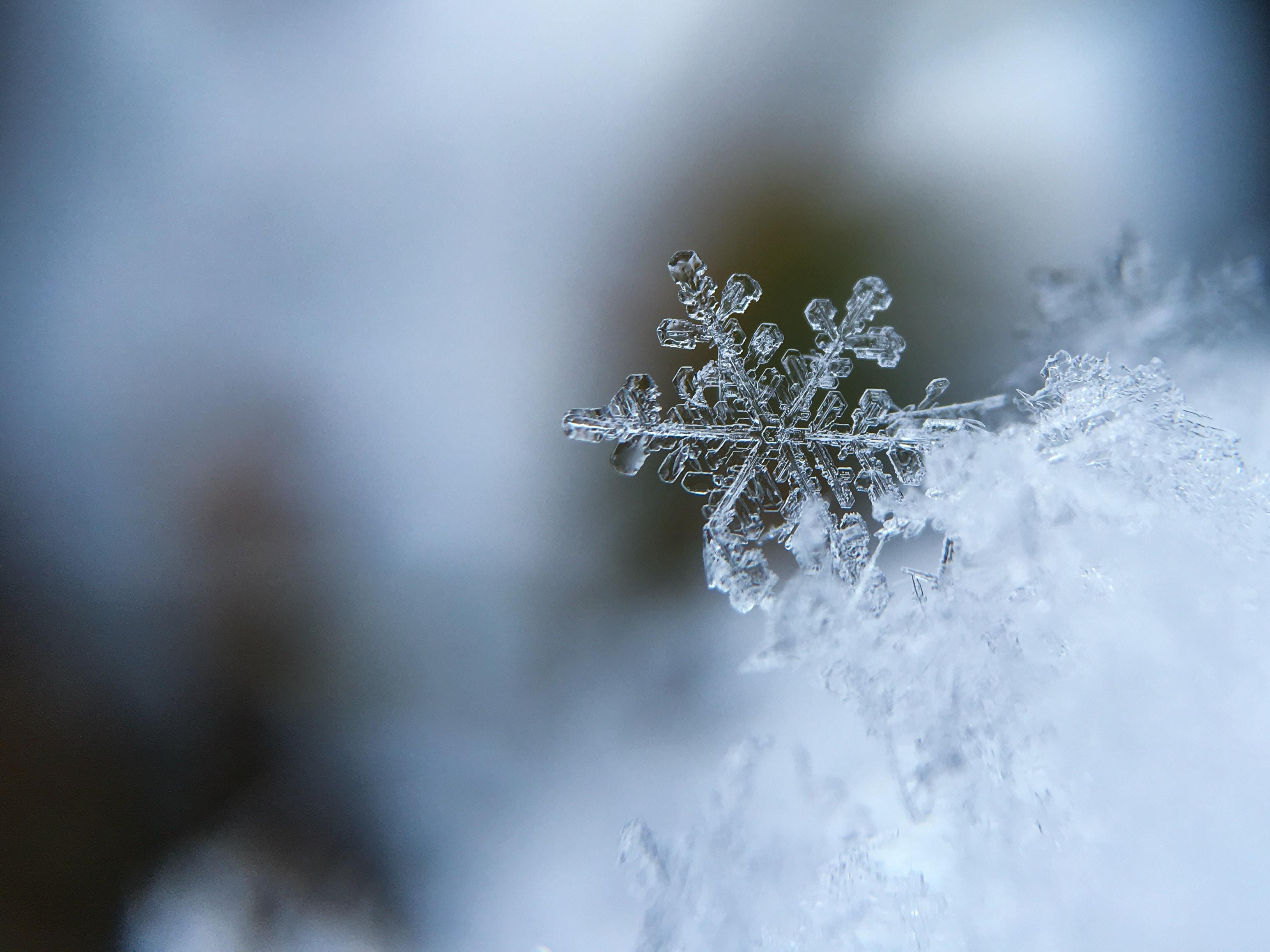 Sneeuwbal 2